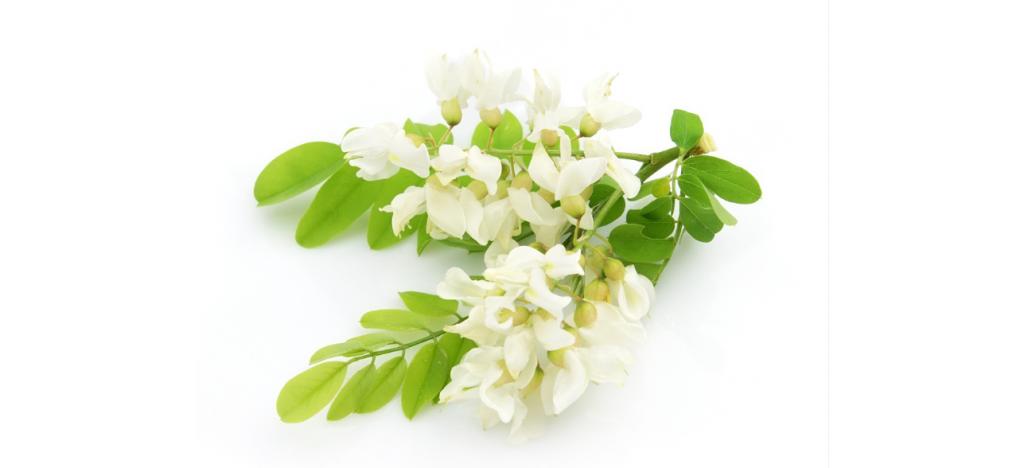Купить Акация цветки  от 50 гр.