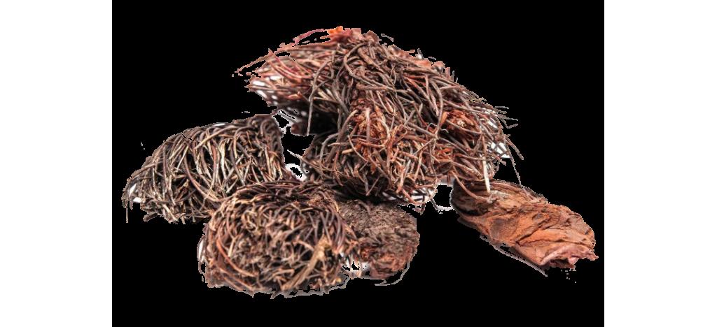 Купить Красная щетка корень (Rhodiola quadrifida) от  25 гр.