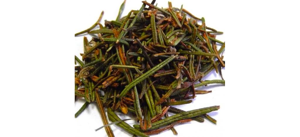 Купить Багульник болотный ( Lédum palústre ) от 50 гр.