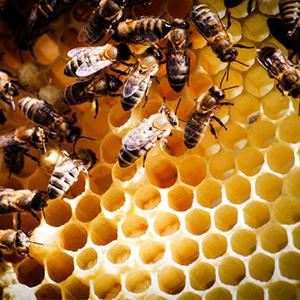 Лечебные свойства перги пчелиной