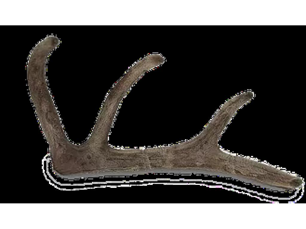 Панты марала Алтайского (свежемороженые) 1кг